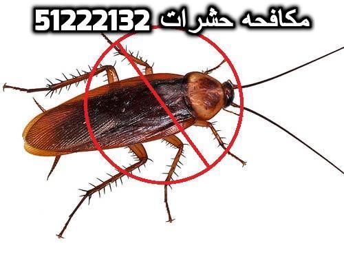 شركة مكافحة الحشرات بالمسيلة بالكويت 51222132