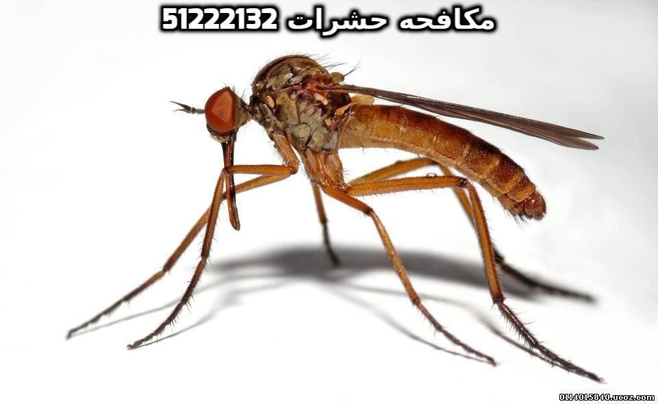 أفضل شركة مكافحة حشرات فى الكويت 51222132