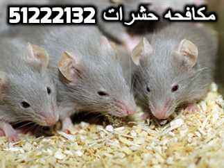 مكافحة حشرات وقوارض في الكويت 51222132