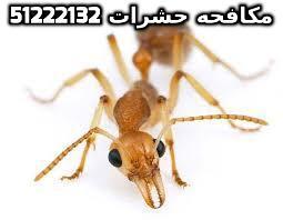مكافحة حشرات وقوارض بالكويت 51222132
