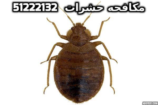 مبيدات البق شركة بست كنترول الكويت 51222132