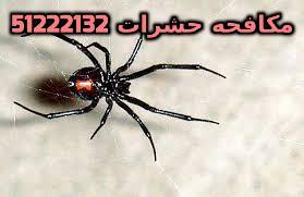 شركة مكافحة حشرات الجهراء 51222132