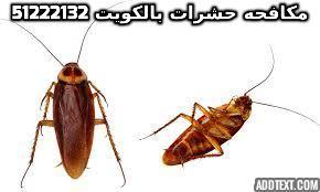 شركة مكافحة حشرات مع الكفالة بالكويت 51222132