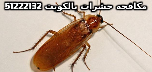 شركة مكافحة حشرات 24 ساعة في الكويت 51222132