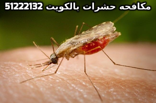 شركة مكافحة حشرات بارخص الاسعار بالكويت 51222132