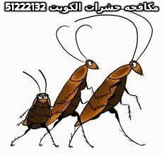 كيفية القضاء على الصراصير بدون مبيدات 51222132