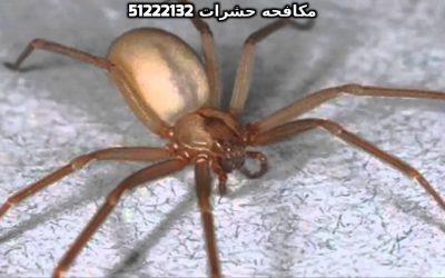 سبب وجود الفئران في البيت بالكويت 51222132