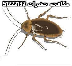 مبيد النمل في الكويت 51222132