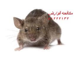 مكافحة الديدان القارضة في الكويت 51222132