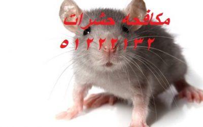 كيف أقضى على الحشرات فى البيت بالكويت 51222132