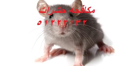 كيف اتخلص من الحشرات الصغيرة في المطبخ الكويت 51222132