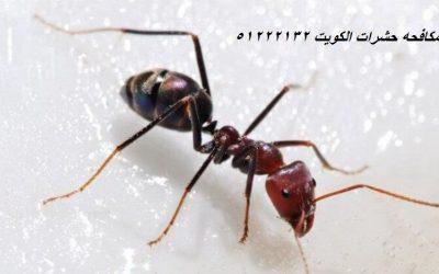 مكافحة الناموس في الكويت 51222132