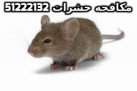 صنع سم للجرذان في الكويت 51222132