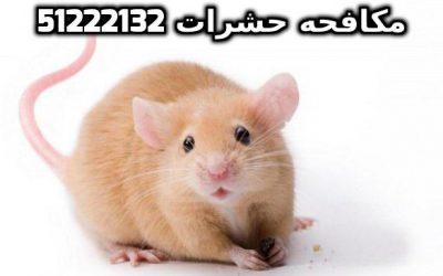 الفرق بين الجرذان والفئران شركة بست كنترول بالكويت 51222132