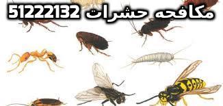 اقوى طريقة لمكافحة الحشرات بالكويت 51222132