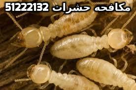 أفضل مبيد للنمل الابيض في الكويت 51222132