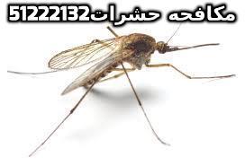 كيف تتخلص من البعوض خصوصاً ليلاً بالكويت 51222132