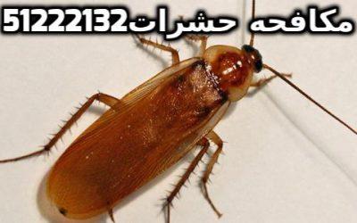 مكافحة الحشرات الطائرة في الكويت 51222132