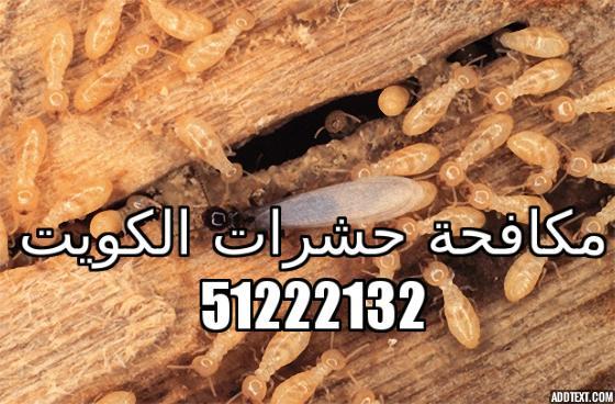 كيف تقضي على النمل الابيض في الكويت 51222132