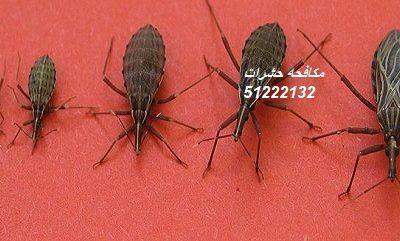 حشرات المنزل الطائره بالكويت 51222132