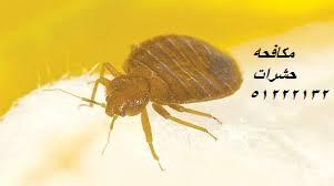 حشرات المنزل الزاحفة في الكويت 51222132