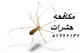 حشرات البق في الكويت 51222132
