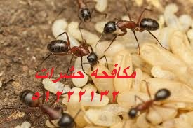 كيف أطرد البعوض من المنزل بالكويت 51222132