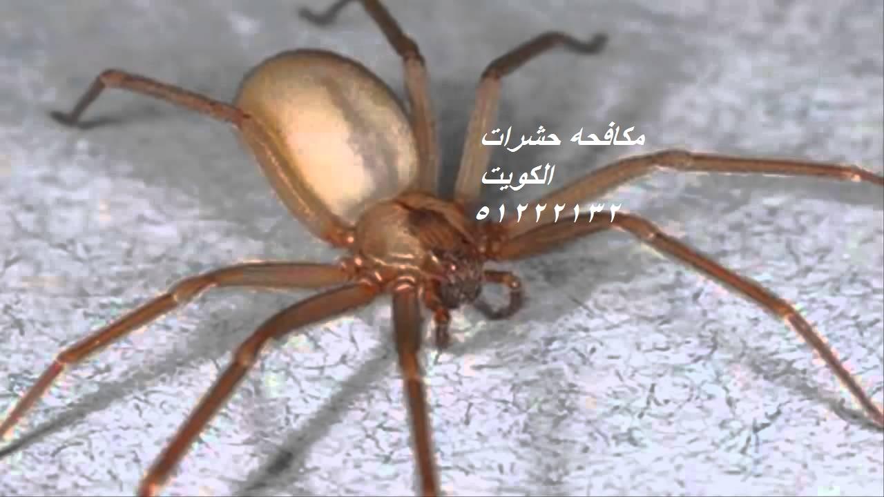 حشرات المنزل بالصور بالكويت 51222132