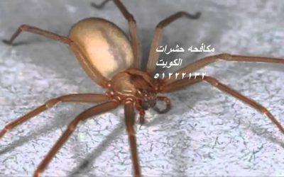 كيفية التخلص من الحشرات الزاحفة في المنزل بالكويت 51222132